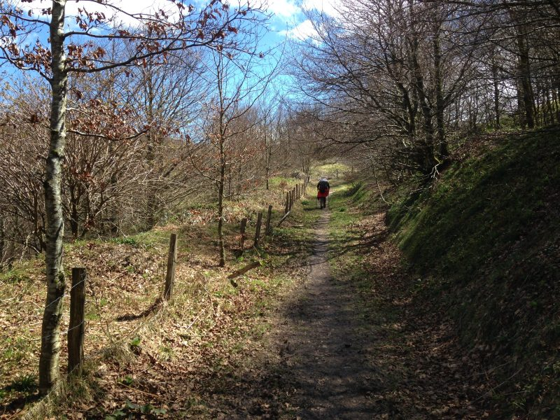 camino_floresta01