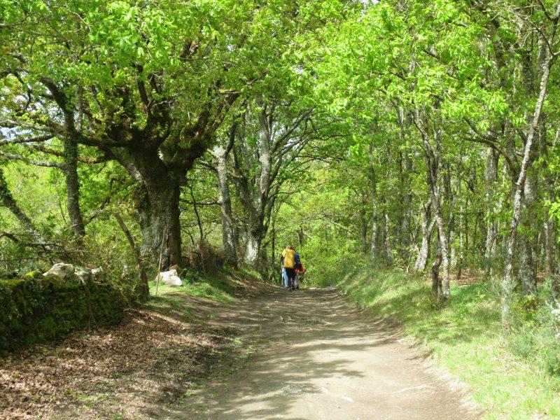 camino_floresta