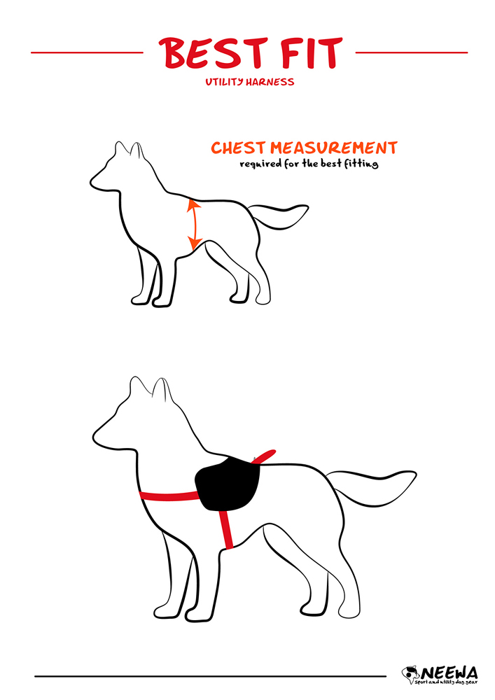 Cat Harness And Bungee Leash, Cat, Get Free Image About