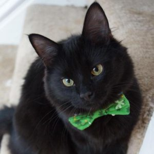 Bagheera the Diabetic Cat's Furiend Lincoln