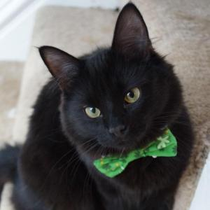 Bagheera the Diabetic Cat's Furiend Lincoln