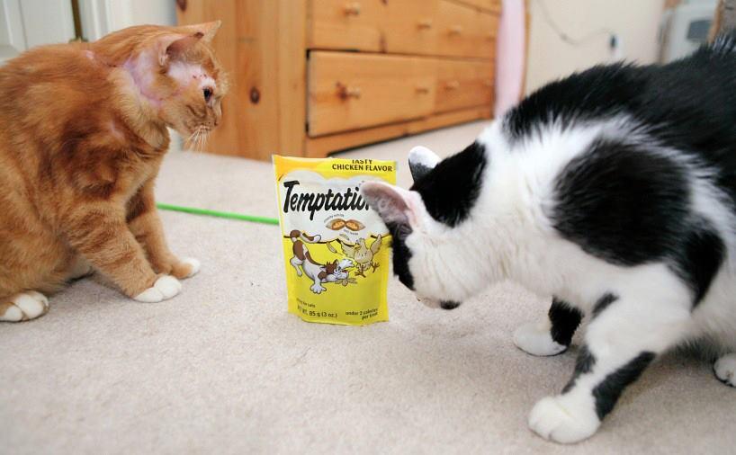 Bagheera the Diabetic Cat's Furiend Lucky seeks Treats