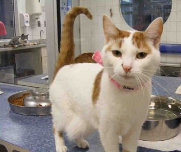 Can We Help Write a Happy Cat Adoption Story for Lilac?