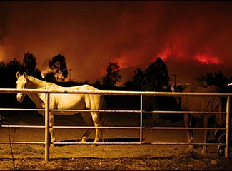 Many Horses Like These Were Rescued During the San Diego Fires