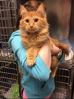 Fiero's Cat Adoption Story is Waiting to be Completed