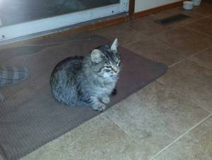 Gracie's Sweet Story is Dangerous for Diabetic Cats