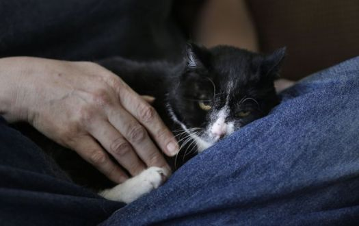 A Cat Rescue Helps Save Human