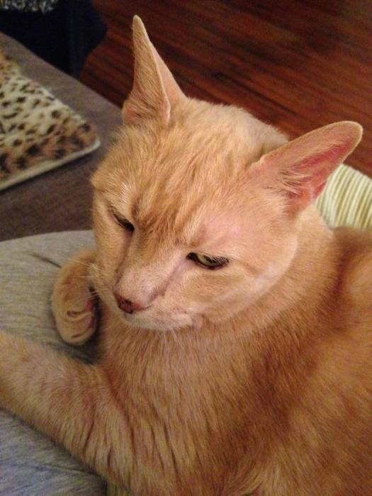 Help Make the Happy Cat Rescue of Hobbes Even Better