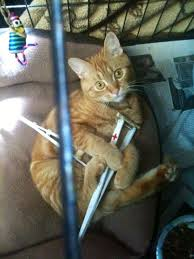 A Typical Cat Injury Does Not Require Crutches