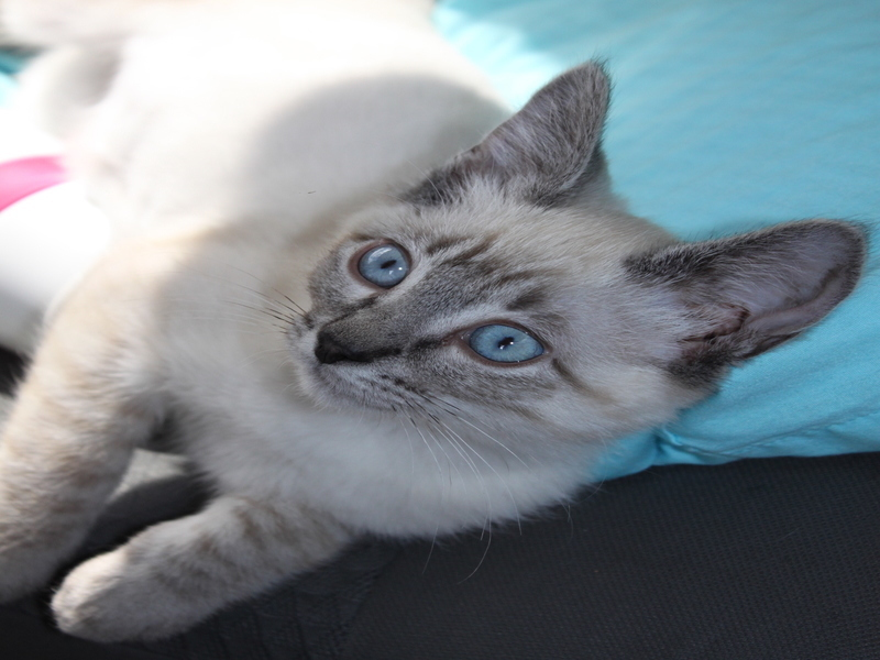 This Cute Kitten Has Recovered From Animal Abuse