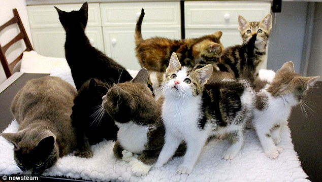 This Group of Polydactyl Cats Have 180 Toes