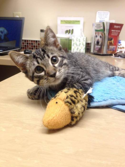 Say Hello to Special Needs Cat Maya