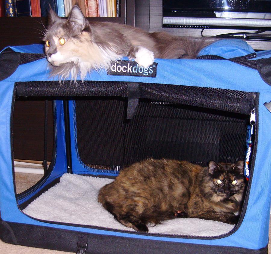 cat boarding dc