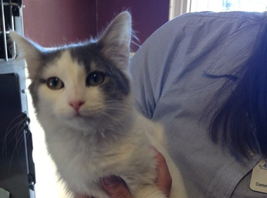 Lost Cat Spice at the Animal Refuge League