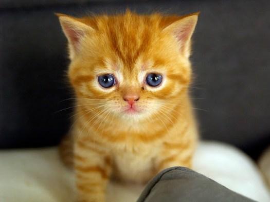Sad-Cat-8