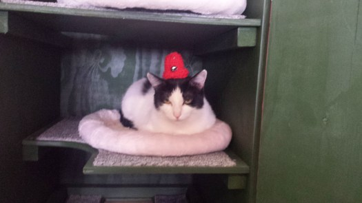 Patra Wearing a Hat at The Cat Cafe