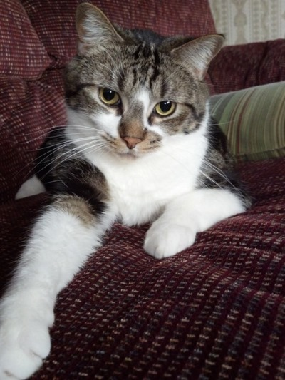 A Happy Cat Rescue Story Features Flash