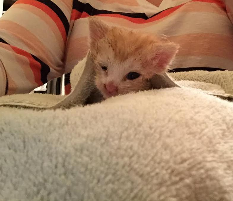 Cashew's Cat Rescue Is a Wonderful Story