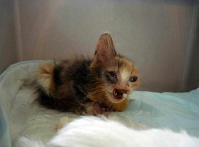 Special Needs Cat Gulumser when she was rescued