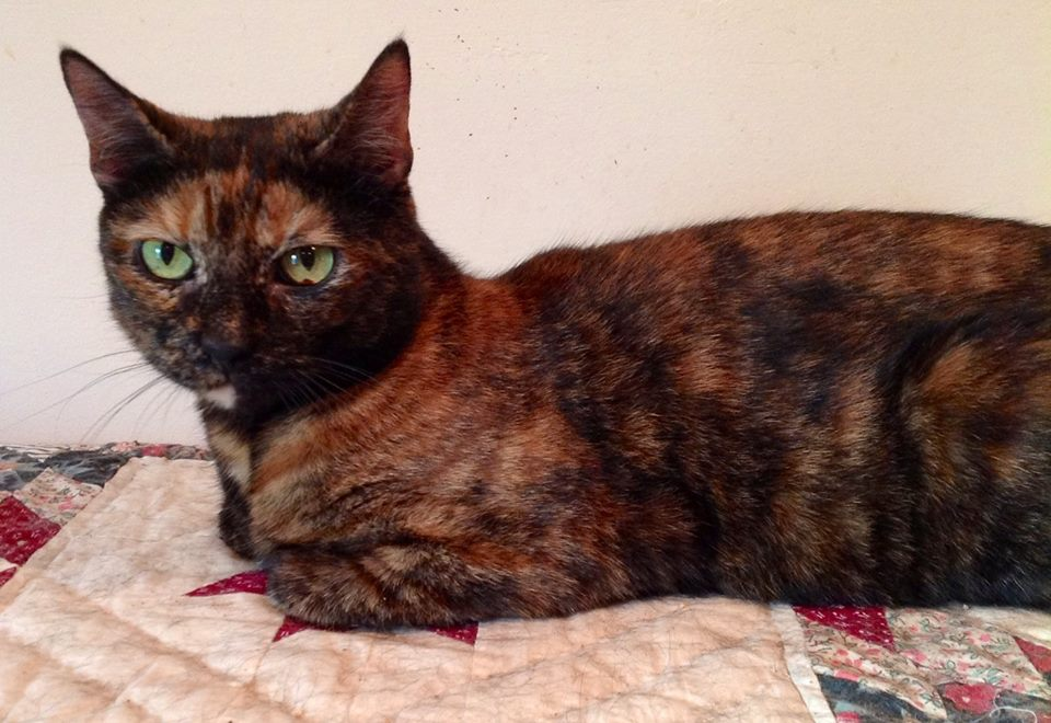 Tinkerbell Was Saved by Diabetic Cats in Need