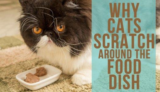Is Scratching Around Food a Strange Cat Behavior