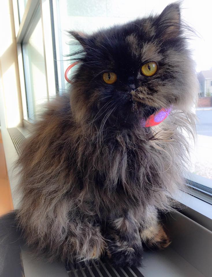 Special Needs Cat Freida Enjoying the Sun
