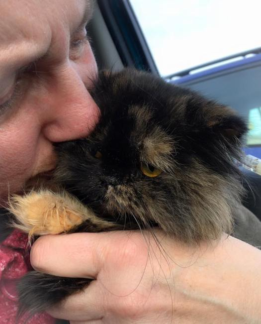 Special Needs Cat Freida Spent her Last Hours With Her Loved Ones