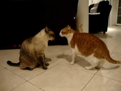 Getting Sugar To A Diabetic Cat