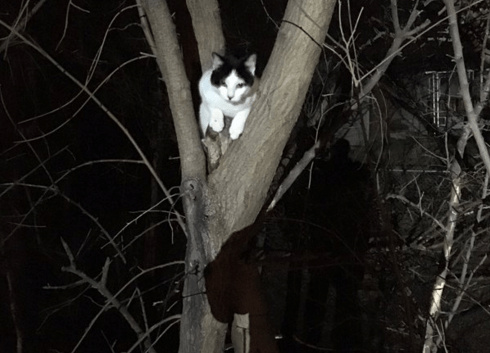Humans With Badges Found This Cat Stuck in a Tree