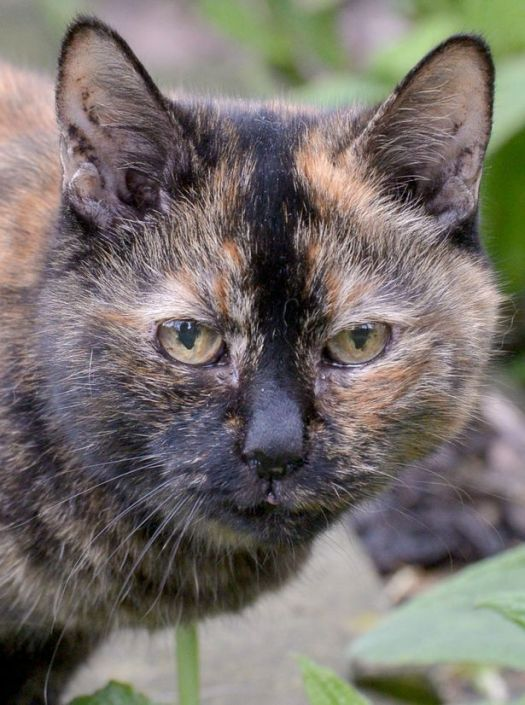 Tilly Has Been With a Cat Rescue Group for 21 Years