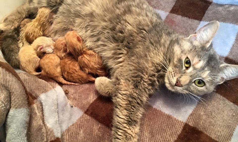 Nala Gave Birth After a Cat Rescue Took Her In