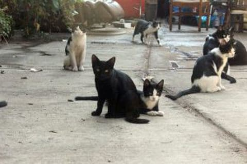 Some of the 30 Cats a Homeless Man Cared For