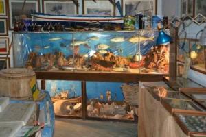 Il museo dell'Acciuga di Aspra al primo posto nella pagina di Tripadvisor