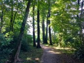 Ronsdorf-Wald