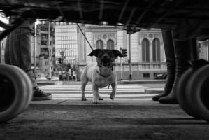 street-photography-milano-2015-0008