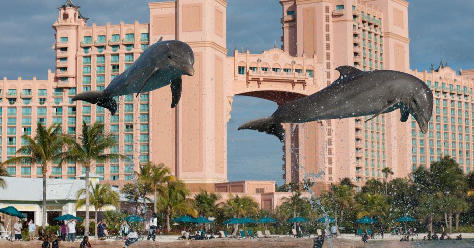 Dolphin Cay at the Atlantis Bahamas. Swim with dolphins on Paradise Island Atlantis. Things to do in Nassau Bahamas. Take a Bahamas Tour with Bahamas Air Tours.