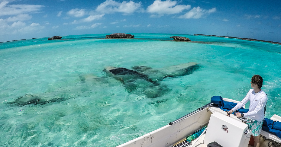 Staniel Cay plane wreck. Drug smugglers crashed their plane in the water off Staniel Cay. Visit Staniel Cay Yacht club and other highlights include exuma pigs, swimming pigs, staniel cay pigs, rock iguanas, thunderball grotto.