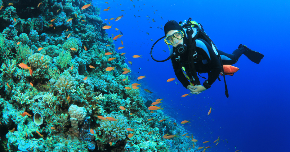 Best scuba diving in the world. Find the best Bahamas Scuba diving destination in our guide to the best diving in the caribbean. Explore the Bahamas on a private Bahamas Toqeur by plane with Bahamas Air Tours; Day trips to Bahamas from Flroida.