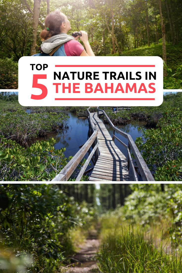 The top Bahamas Nature Trails and Bahamas Hiking. Discover the top 5 Bahamas Hikes with our guide to the Bahamas Nature Trails and the top things to do in Bahamas. Away from the stunning Bahamas Beaches you can venture into forests and mangroves across the Bahamas Islands. With some amazing photography opportunities and Nature encounters visit the Bahamas National Parks and their unique exotic wildlife.