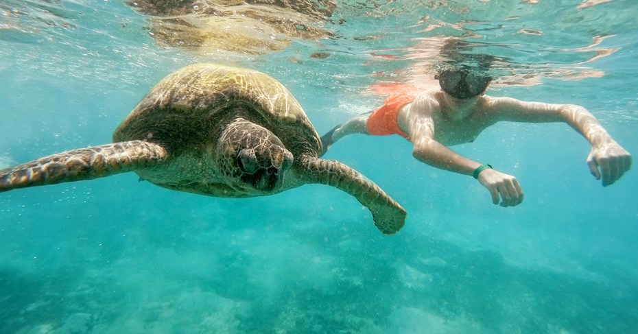 Day trip to Bahamas swim with Turtles in the Abaco Islands. The worlds first Bahamas Day Trip from Florida with Bahamas Air Tours.
