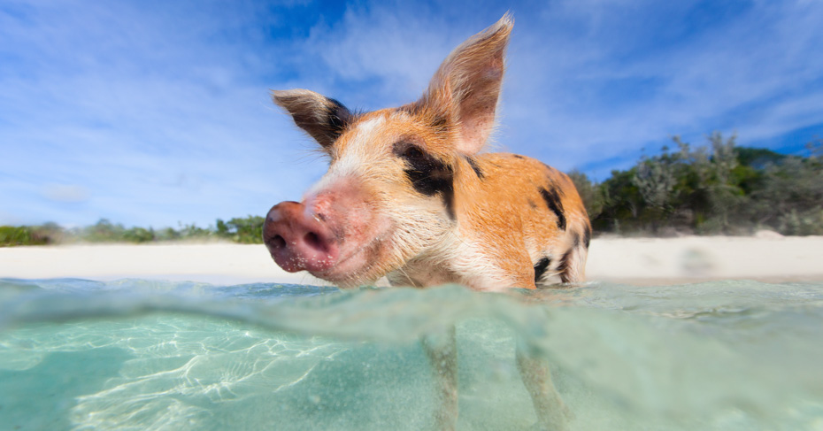 Orlando Day Trips to Bahamas Swimming Pigs on Staniel Cay. Take the worklkds first Bahamas Day Trips from Florida with Bahamas Air Tours.