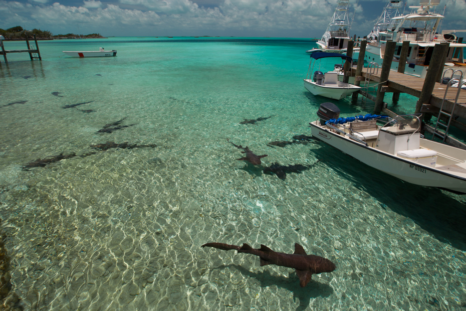 Staniel Cay Yacht Club Bahamas marina where you can find nurse sharks swimming in the water around Staniel Cay Bahamas. Take a Staniel Cay Day Trip with Bahamas Air Tours from Florida by plane.