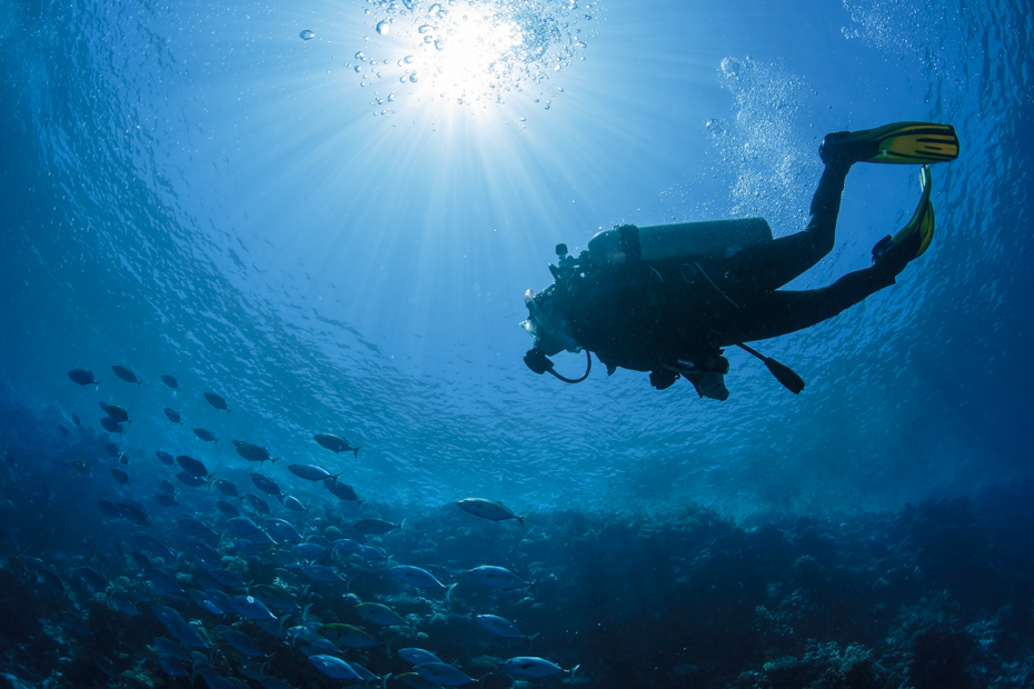Best Nassau Scuba Diving Sites