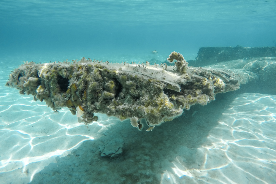 The Bahamas Plane wreck at Staniel cay has marine life growing on it. You can snorkel into the Staniel Cay underwater plane wreck on a Bahamas Day Trip.