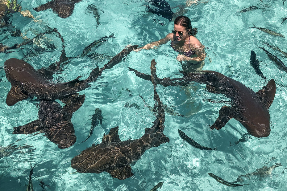 Compass Cay Sharks experience on a Bahamas Day Tour from Nassau and Florida.
