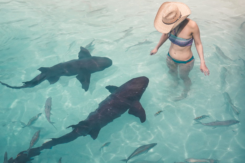Swim with sharks on a Fort Lauderdale Bahamas day trip to Compass Cay.