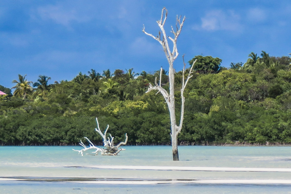 Visit the iconic Lone Tree on a Harbour Island Day trip from Nassau by Plane. Our guided tour around Dunmore Town and Pink Sands beach will visit the Lone Tree, a famous landmark on ELeuthera.