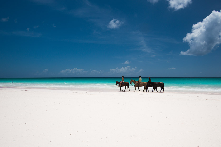Horse Riding on the Pink Sands Beach at Harbour Island Bahamas. Take the Harbour Island Day Trip to Pink Sands Beach and go horse riding on this top Bahamas Day Excursion.