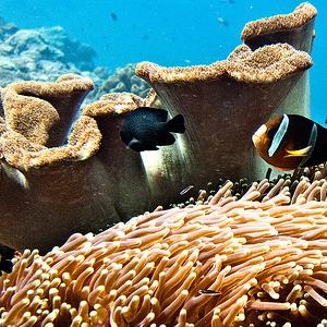 coral reef threats bahamas