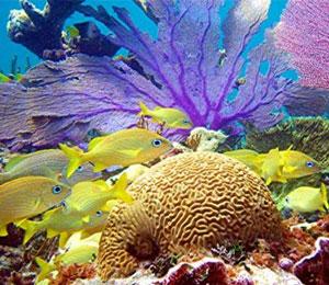 bahamas coral reefs bahamas